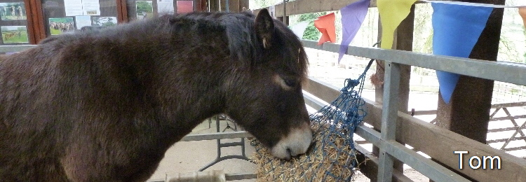 exmoor_pony_adoption_renewal