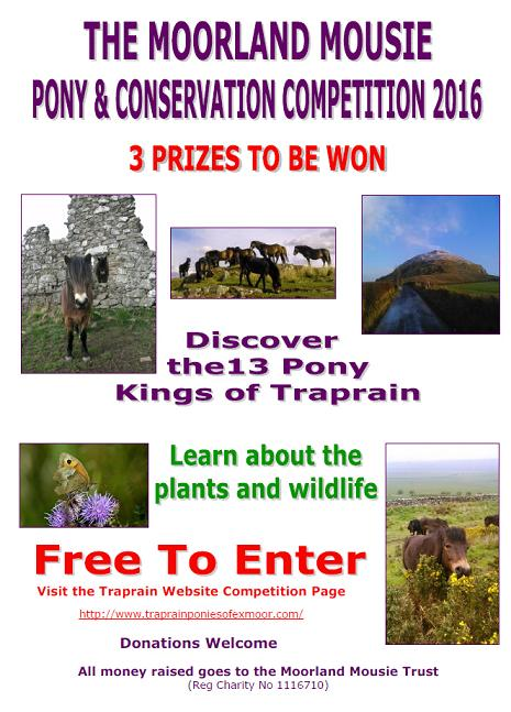 exmoor_pony_centre, exmoor_pony_competition
