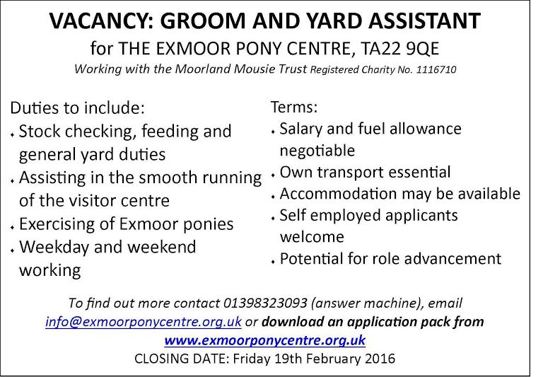 exmoor_pony_job_vacancy